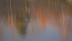 träden speglar sig i vattenytan