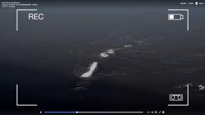 Skärmdump av video på en rad isbitar som flyter omkring i vatten.