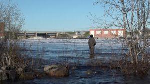 Kalastaja seisoo Kemijoessa