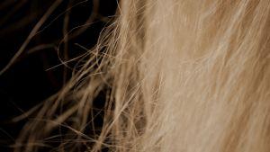 Närbild av blonda hårstrån mot mörk bakgrund