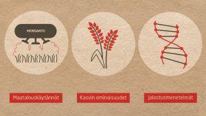 grafiikka GM-keskustelun osa-alueista: maatalouskäytännöt, kasvien ominaisuudet ja jalostamisessa käytetyt menetelmät.