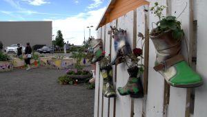 Valkoiseen aitaan on ripustettu maalein koristeltuja saappaita, joihin on istutettu mansikantaimia. Taustalla näkyy maalein koristeltuja viljelylaatikoita, autoja parkkipaikalla ja ison rakennuksen seinää.