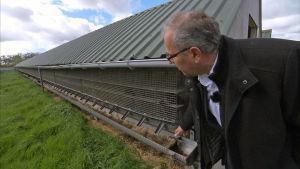 Wim Verhagen turkistarhallaan Hollanissa toukokuussa 2017.