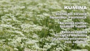 Kumina