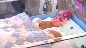 Ett för tidigt fött tvillingpar ligger i samma lilla säng på ÅUCS neonatala avdelning.
