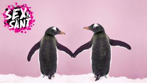 två pingviner som går hand i hand