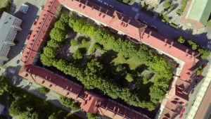 Petteri Saarion ohjaama Asvalttiviidakot on kuusiosainen dokumenttisarja kaupunkiluonnosta.