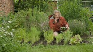 Mies on kyykyssä kasvimaalla. Miehellä on kädessään kulho, jossa on salaattia.