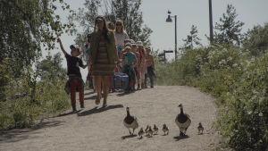 valkoposkihanhiperhe kävelee hiekkatietä, perässä samaa tietä pitkin tulee päiväkotiryhmä.