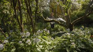 Mies ravistaa riippumattoa rehevässä puutarhassa, jossa on paljon kukkia. Riippumatosta lentää omenankukan terälehtiä ilmaan.