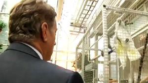 Presidentti Sauli Niinistö keskustelee papukaijan kanssa Betania-perhospuutarhassa Joensuussa.