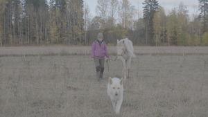 hevonen ja koira