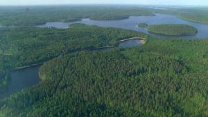 Sinivihreää järvien maisemaa ilmasta käsin.