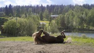 Hevonen piehtaroi laitumella