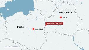 Skogen omfattar en närapå lika stor del i Polen som i Vitryssland.