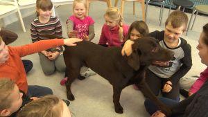 En brun labrador ger tass åt en människa.
