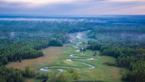 Flod som ringlar sig genom dimmig skog