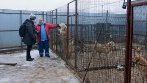 Irina Subbotkina (i röd jacka) driver en hundgård i Viborg.