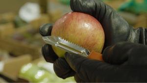 Omena ja kuorimaveitsi mustanahkaisilla hansikkailla verhotuissa käsissä.