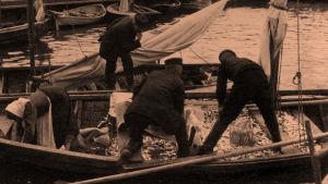 Silakkamarkkinat 1912