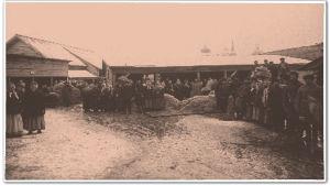 Venäläiset pellavamarkkinat Pihkovassa 1880-luvulla.