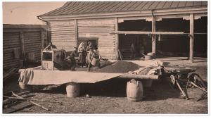 Viljan puintia Siperiassa, talousrakennusten sisäpihalla noin vuonna 1914.