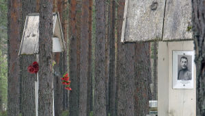 Petroskoin lähistöllä oleva metsikkö jossa on kadonneiden muistomerkkejä.