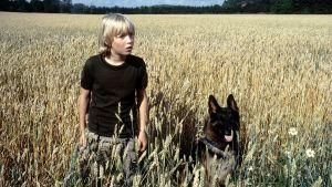Tomi (Paavo Westerberg) ja Roi (poliisikoira Jami) pellolla.