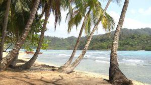 Panamalainen paratiisiranta palmuineen