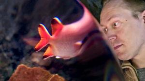 Teppo Mattsson katsoo kaloja Sea Lifessa.