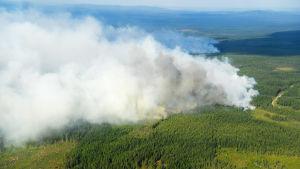 En skogsbrand i Ljusdal i Sverige.