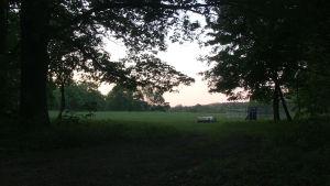 Brandenburg på gränsen mot Polen hör till Tysklands vargtätaste områden