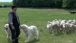 Frank Hahnel med några av sina hundar och får i Brandenburg.