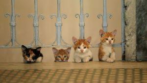 Kissanpentuja Istanbulissa. Kuva dokumenttielokuvasta Kedi eli Istanbulin kissat.