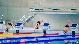 Kolme uimaria hyppäämässä uima-altaaseen pää edellä.