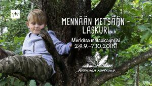 Lapsi istuu puussa.
