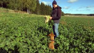 Sebastian Sohlberg ger en sockerbeta åt sin hund på en åker.