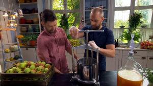 Kaksi miestä puristaa omenoista mehun.