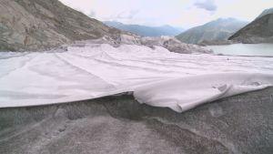 Rhôneglaciären i Schweiz täcks in i filtar för att inte smälta