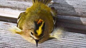 Kuvalliset kysymykset: Outo lintu