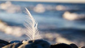 Valkoinen höyhen rannalla.