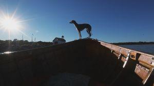 Hund i fören på båt