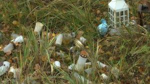 gravljus i gräs