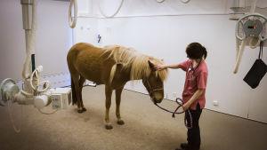 Hevonen tutkimushuoneessa lääkärin kanssa.