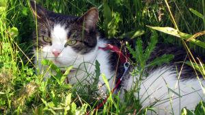 Kissa ruohikossa.