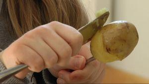 Elev i Seminarieskolan skalar potatis.