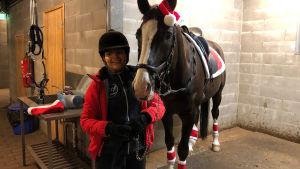 Jouluvarusteisiin puettu hevonen pilttuussa, nuori nainen ratsastuskypärä päässä.