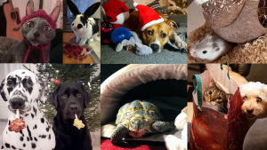 Lemmikkieläimiä joululahjojensa kanssa, kuvakollaasi.
