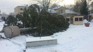 Julgranen på torget i Dalsbruk ligger på marken efter att alla vajrar gått av i en vinterstorm.