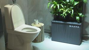 en så kallad grön vägg som förbättrrar inomhusluften